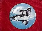 Buffleheads,Natures Heritage, American Waterfowl