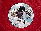 Mallards, Nature's Heritage, waterfowl of America