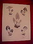 Print of mushrom species, Dathe 1973