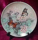 Monarch Butterflies plate, On Gossamer wings, Lena Liu