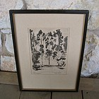 Listed California Artist 1930's Eucalyptus Etching
