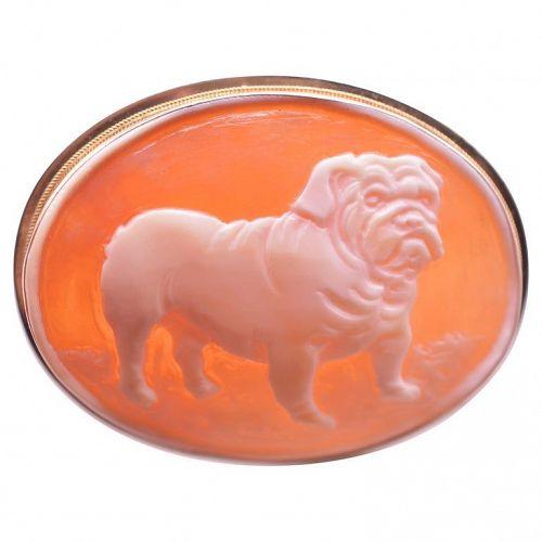C.1970 9K Gold Shell Cameo Brooch of Stout English Bulldog bespoke
