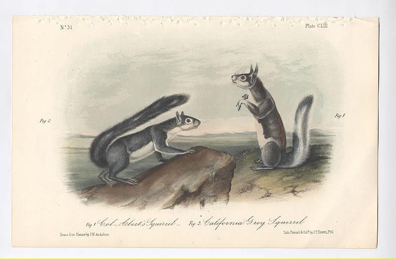 SQUIRRELS COLONEL ALBERT GREY John Audubon Octavo 1854 New York