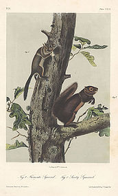 SQUIRREL FREMONT SOOTY John Audubon Quadruped Octavo 1854 New York