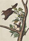 SQUIRREL OREGON FLYING John Audubon Quadrupeds Royal Octavo 1854