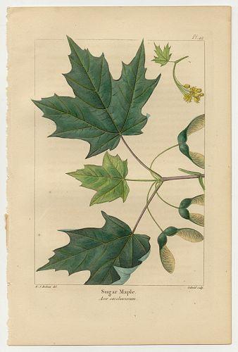 MAPLE SUGAR Michaux Bessa North American Sylva 1857 Philadelphia