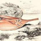 TRUMPET FISH Engraving History Fish British Islands Jonathan Couch