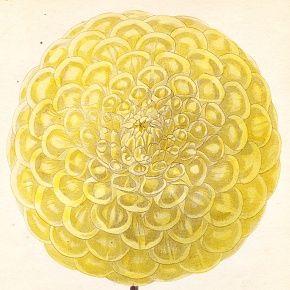 RIVAL REVENGE COXS Engraving Floricultural Cabinet Harrison London