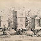 HIVES WOODEN Engraving Naturalist Library Jardine Antique Print