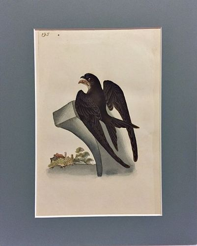 SWIFT Engraving Natural History British Birds Edward Donovan Antique