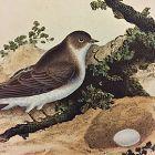 MARTIN SAND Engraving Natural History British Birds Edward Donovan