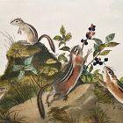 SQUIRREL STRIPED GROUND Lithograph John Audubon Quadruped Octavo