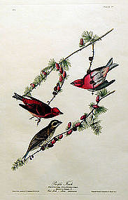 FINCH PURPLE John Audubon Birds America Amsterdam 1972 New York