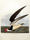 SKIMMER BLACK John Audubon Birds America Amsterdam 1972 New York