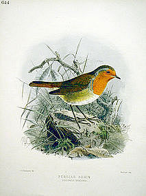 Dresser Birds of Europe Redbreast Robin Lithograph