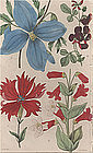FLOWERS HEARTSEASE Floricultural Cabinet Harrison London