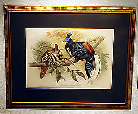 FIREBACK VIEILLOT John Gould Hart Richter Birds Asia Antique Framed