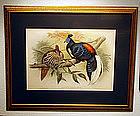 Gould Birds of Asia Antique Print Framed
