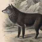 The Wolf Mivart Dogs Jackals Wolves Foxes