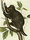 PORCUPINE CANADA John Audubon Quadruped Royal Octavo Antique New York