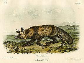 FOX JACKAL John Audubon Quadruped Royal Octavo Antique New York