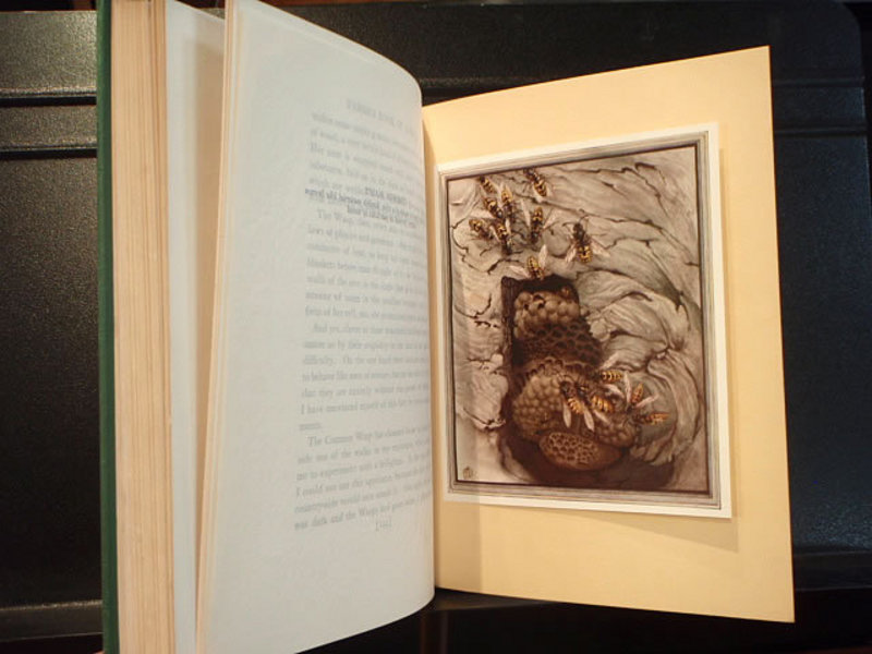 Fabre's Book of Insects 1935 Detmold Illustrations