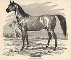 Antique Print of Arabian Horse 1890 Friend and Foe