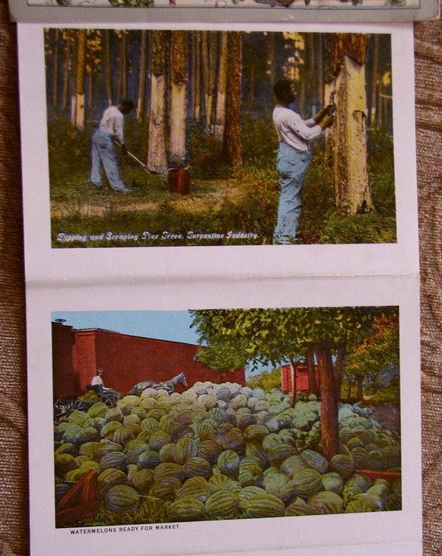 C1900 Souvenir Photo Postcard Folder SUNNY SOUTH Cotton