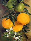 American Still Life Painting with Oranges