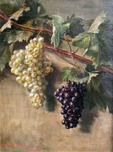 Painting of Grapes by Anna C. Freeland (American 1837-1911 )