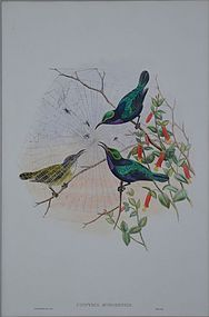 Gould and Richter, Hummingbirds.