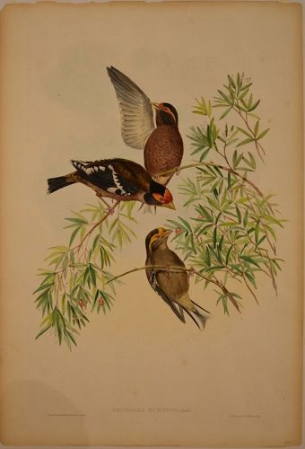 Gould and Richter, American 19th C. Lithograph.  Original color