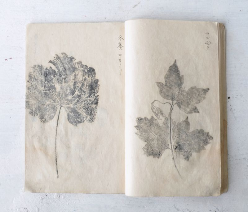 JAPANESE SAMPLE BOOK OF PRESSED BOTANICAL PRINTS