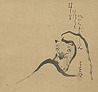 Japanese Zen Art, Tanuki in Priest Robes by Mokurai