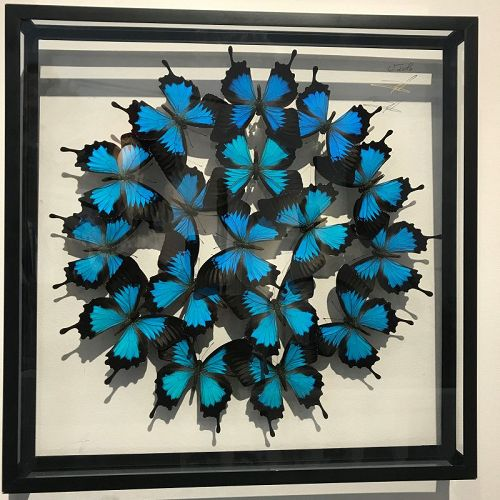 olivier violo butterfly pannel