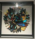 olivier violo ,muticolor butterfly pannel