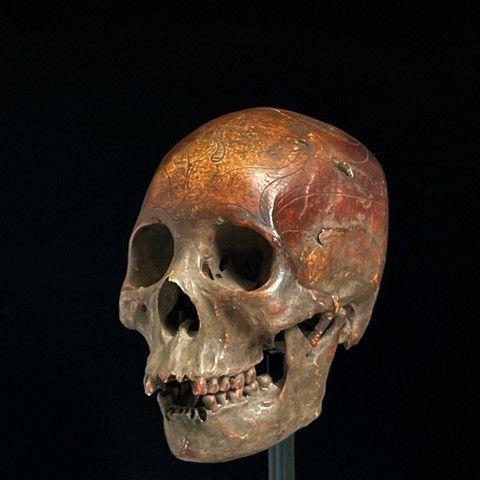 an Apo Kayan  skull Borneo,indonesia