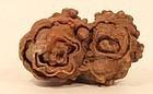 Moroccan stromatolite fossil