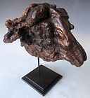 Mounted Chinese natural Burl Ram's Head